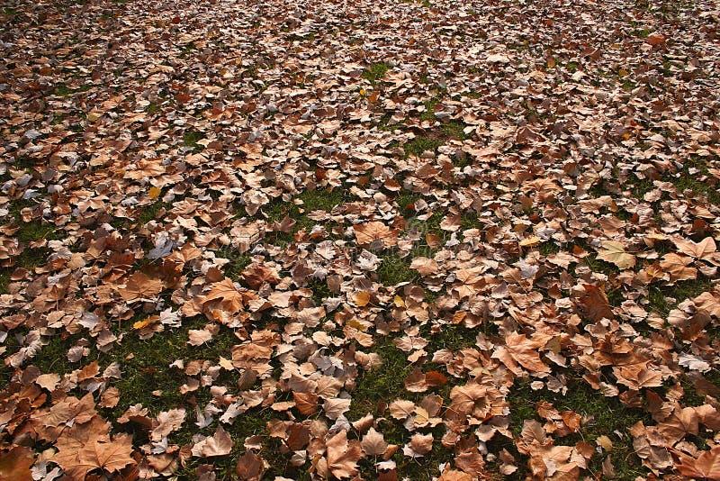 Le foglie sul sviluppate bruniscono fotografie stock