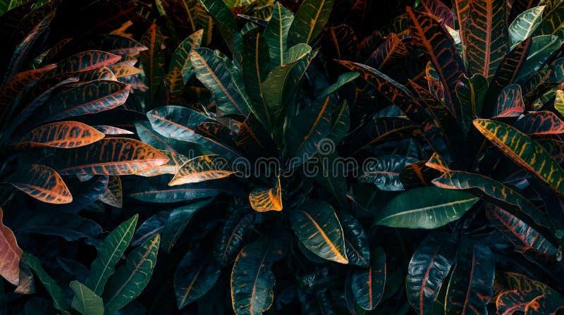 Le foglie variopinte completano il fondo di vista Concetti di autunno della natura fotografia stock