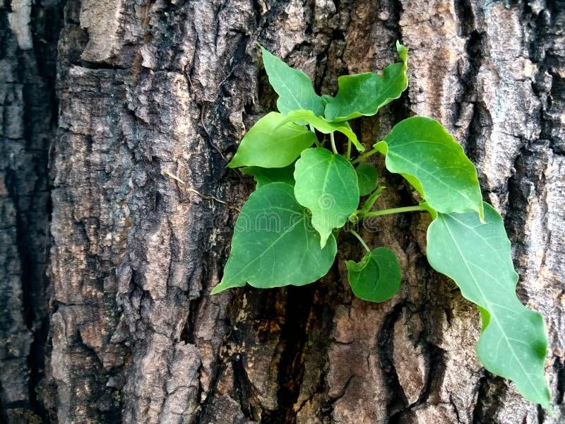Le foglie verdi fresche germinano in mezzo all'albero immagini stock libere da diritti