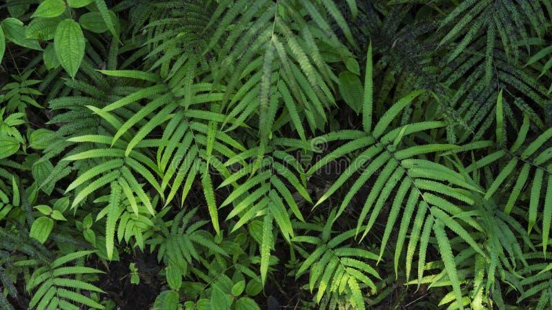 Le foglie verdi fresche strutturano per il fondo della natura e la progettazione, foli immagine stock libera da diritti