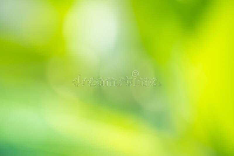 Le foglie verdi hanno offuscato il fondo e la luce solare, stagione primaverile fotografia stock libera da diritti