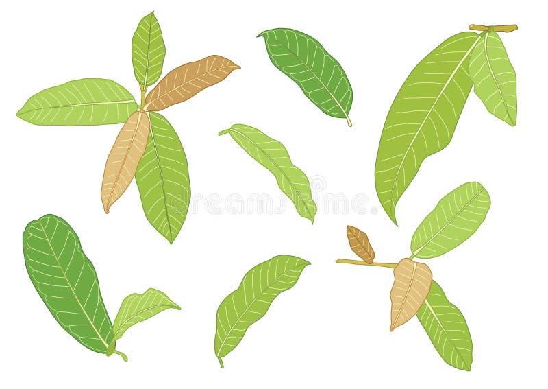 Le foglie verdi sono un mazzo fresco illustrazione vettoriale
