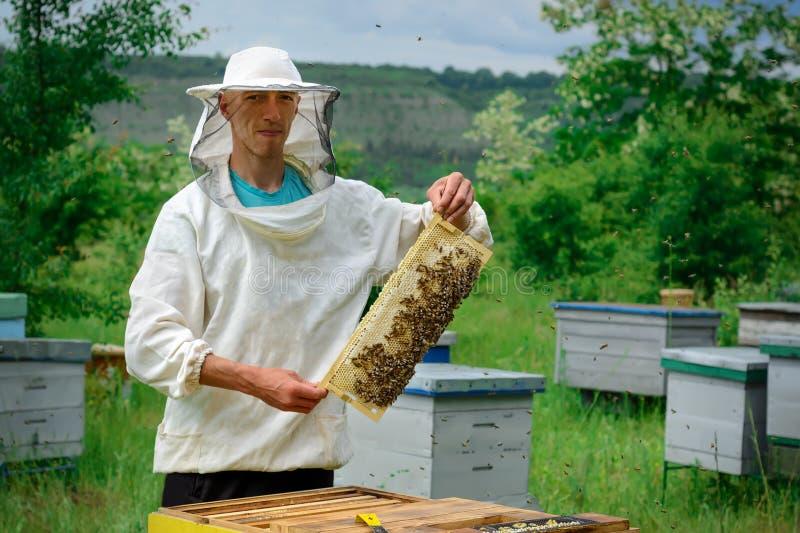 Le fonctionnement d'apiculteur rassemblent le miel Apiculteur jugeant un nid d'abeilles plein des abeilles Concept de l'apicultur images stock
