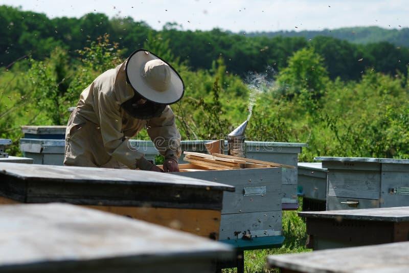 Le fonctionnement d'apiculteur rassemblent le miel rucher Concept de l'apiculture image stock