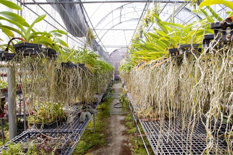 Le Fond Aérien D Orchidée Photographie stock