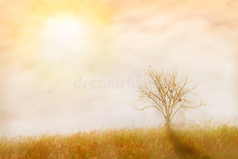 Le fond abstrait de nature fait avec des filtres de couleur dans le col mou photo stock