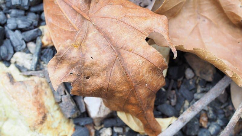 Le fond abstrait, s?chent des feuilles au sol dans la for?t images stock