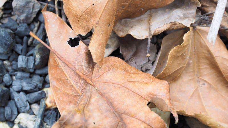 Le fond abstrait, s?chent des feuilles au sol dans la for?t photos stock