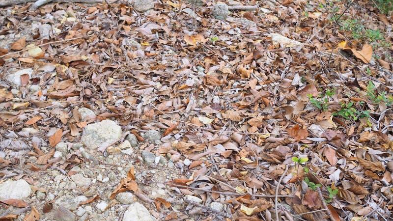Le fond abstrait, s?chent des feuilles au sol dans la for?t photographie stock