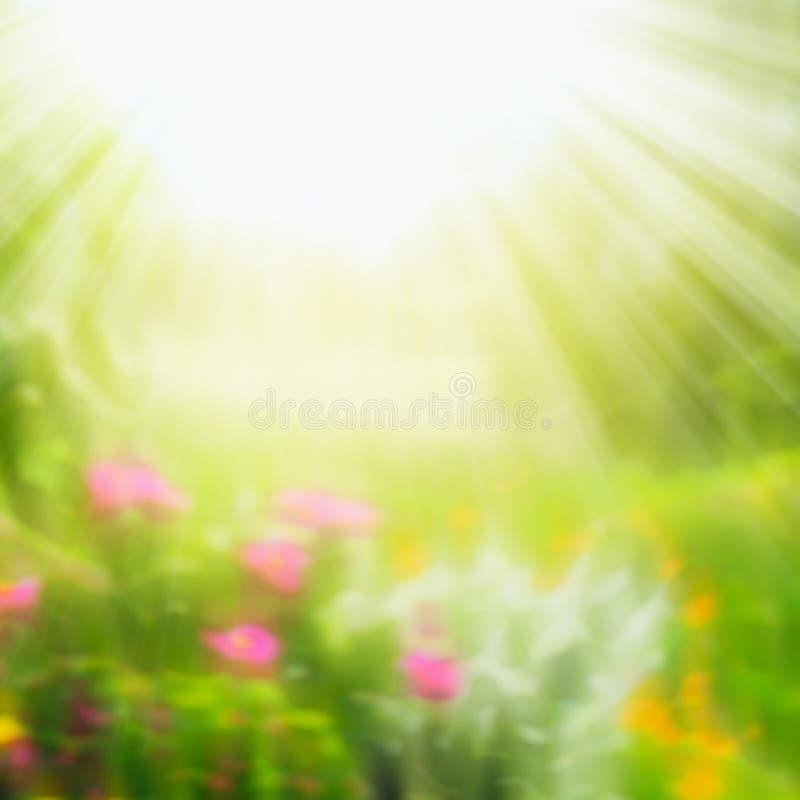 Le fond brouillé de nature d'été avec le soleil rayonne le jour ensoleillé image stock