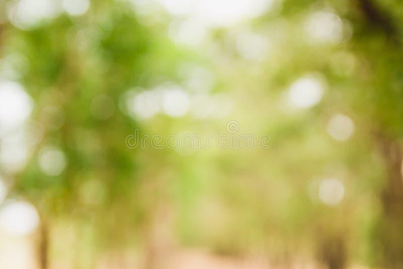 Le fond a brouillé l'image de la forêt verte naturelle en Li de jour ensoleillé photographie stock libre de droits