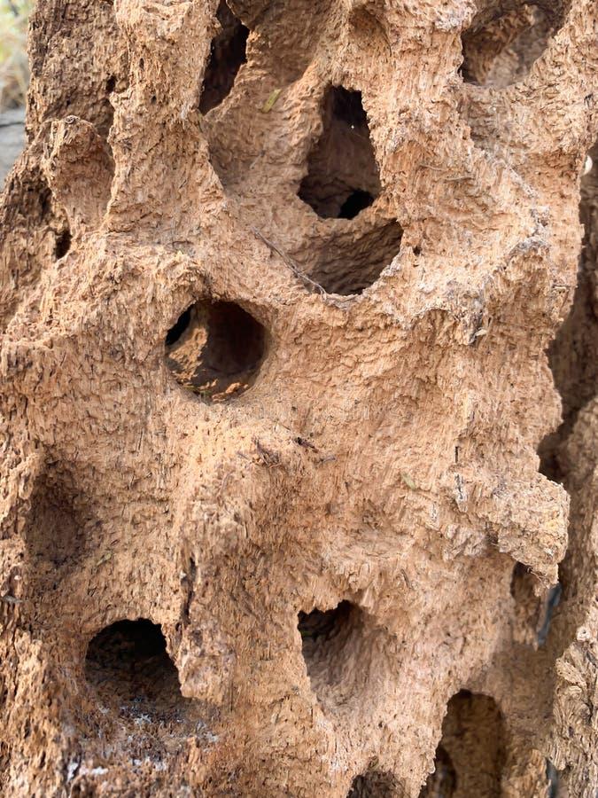 Le fond brun de fourmilière images libres de droits