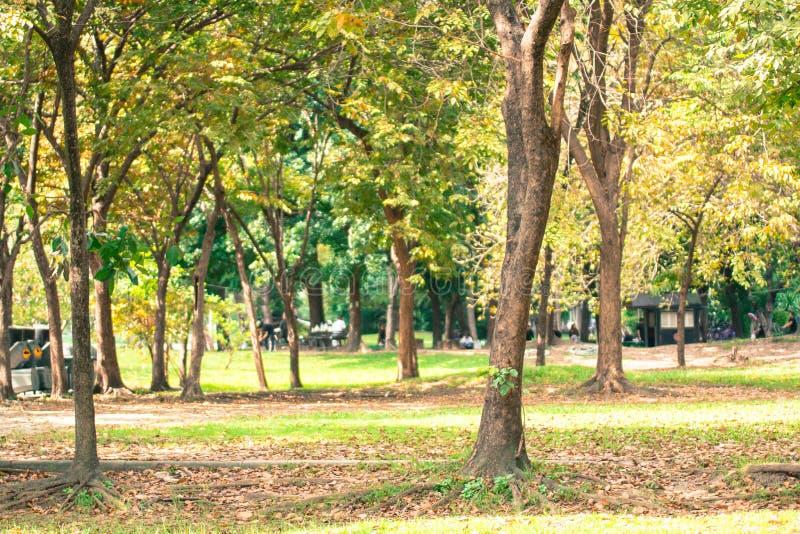 Le fond d'arbre en parc de la Thaïlande photo libre de droits