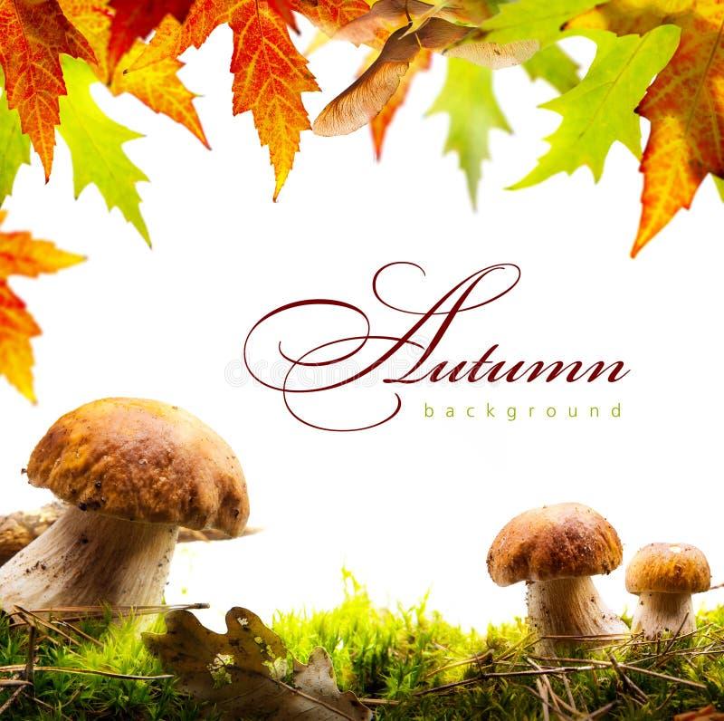 Le fond d'automne avec des feuilles de jaune et l'automne répandent photographie stock libre de droits