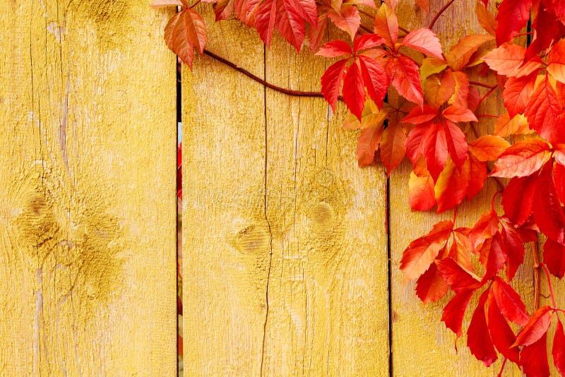 Le fond d'automne, rouge part de la texture en bois photo stock
