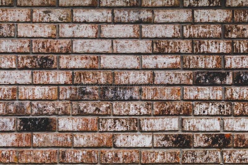 Le fond de mur de briques s'est fané avec les oranges amorties, les rouges, et les noirs photo stock