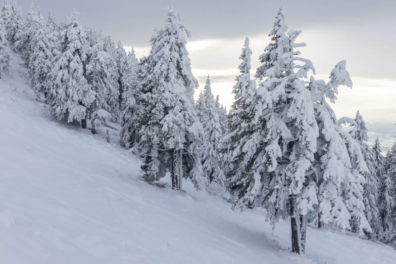 Le fond de Noël et de nouvelle année avec des arbres d'hiver a couvert de neige fraîche dans les montagnes avec le ciel coloré -  photo stock