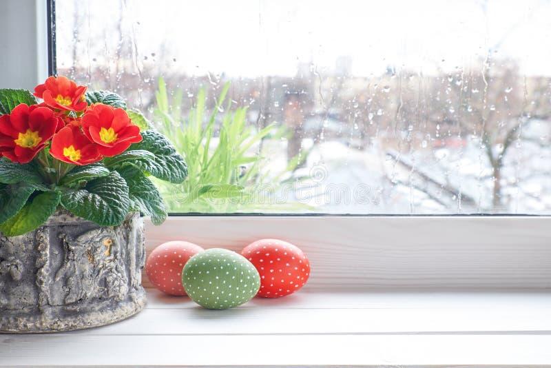 Le fond de ressort avec la primevère rouge fleurit dans le pot et la Pâques par exemple photos stock