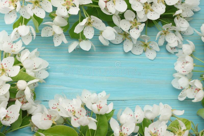 Le fond de ressort avec les fleurs blanches se développe sur le fond en bois bleu Vue supérieure image stock