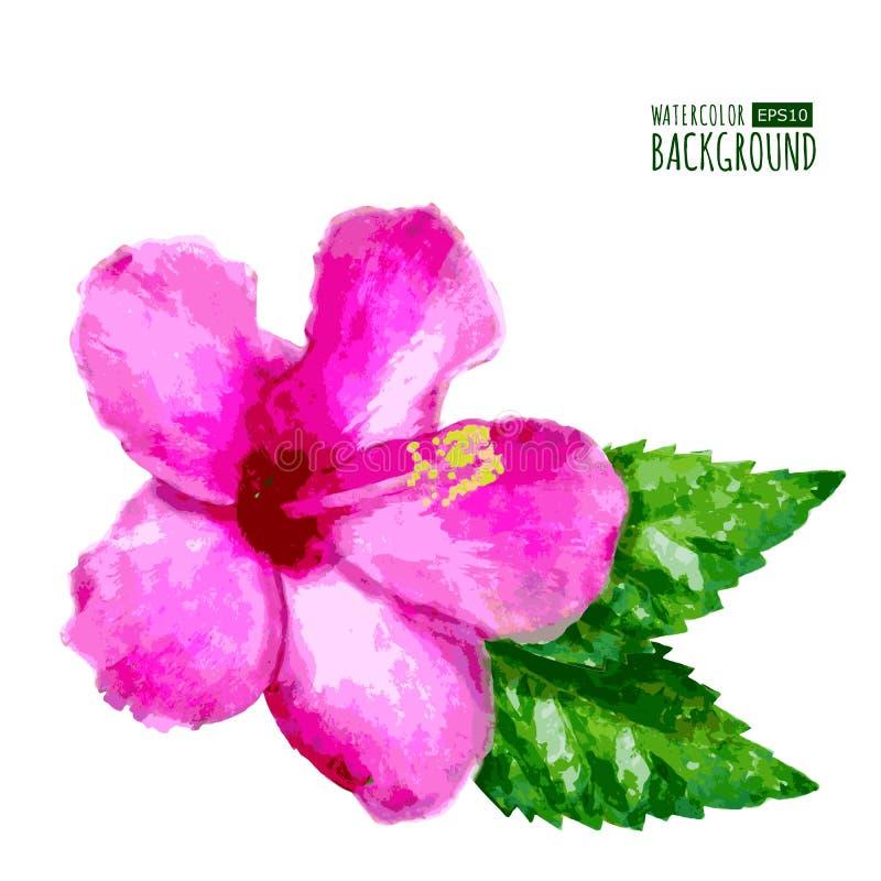 Le fond de vecteur d'aquarelle avec la ketmie tropicale rose fleurissent illustration libre de droits