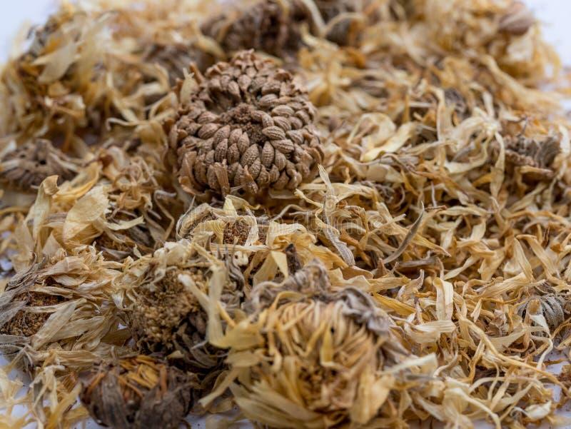 Le fond du calendula sec fleurit les pétales secs de souci Homeo photographie stock