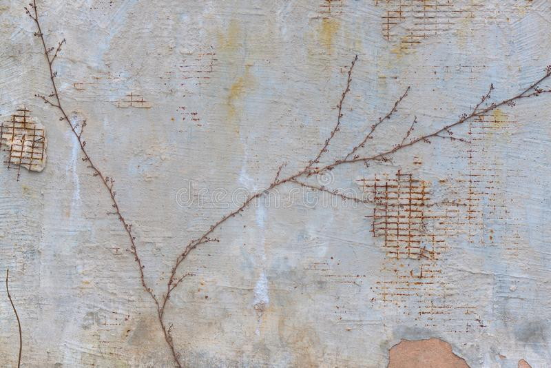 Le fond du mur minable avec des grilles et une brindille sèche photo stock