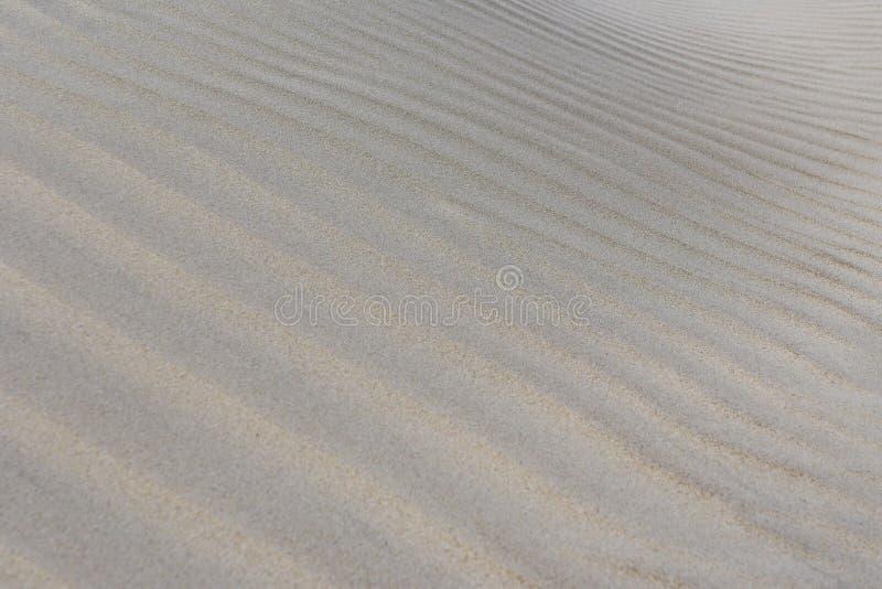 Le fond du sable, vent a formé le soulagement, bord de mer baltique photos stock