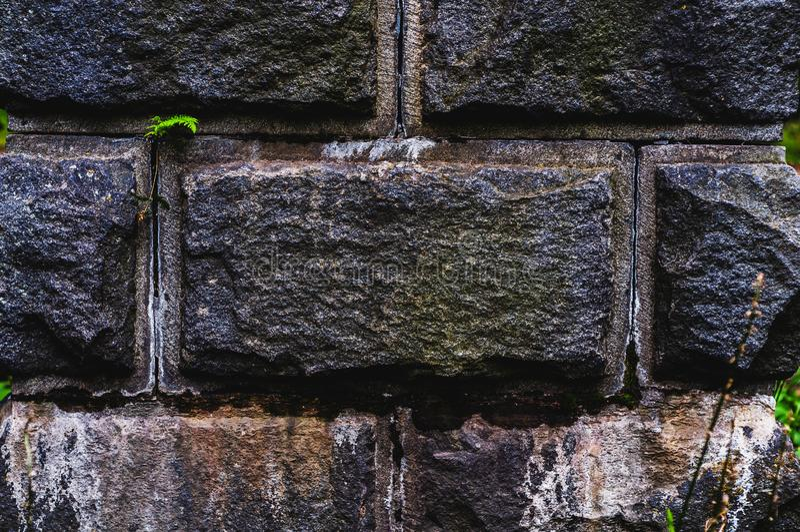 Le fond du vieux mur obscurci avec le gris de granit a rudement traité les pierres rectangulaires en gros plan avec une feuille v photo libre de droits