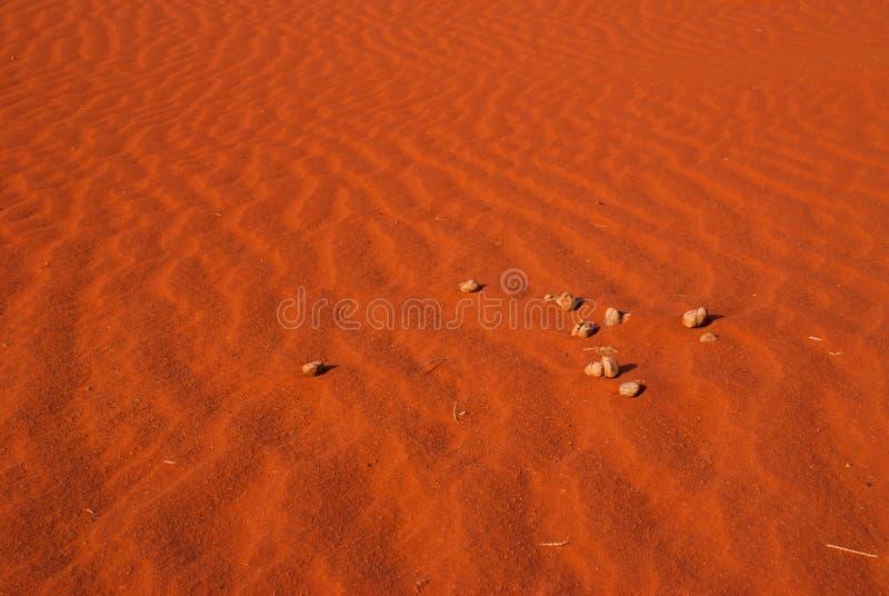 Le fond dunaire du désert orange, rhum d'oued photos stock