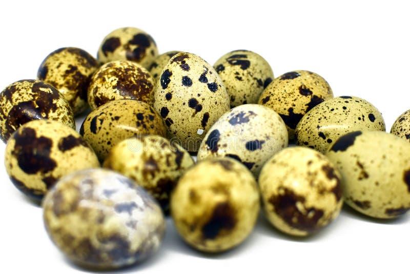 le fond eggs le blanc s?lecteur de cailles d'isolement par orientation photos stock