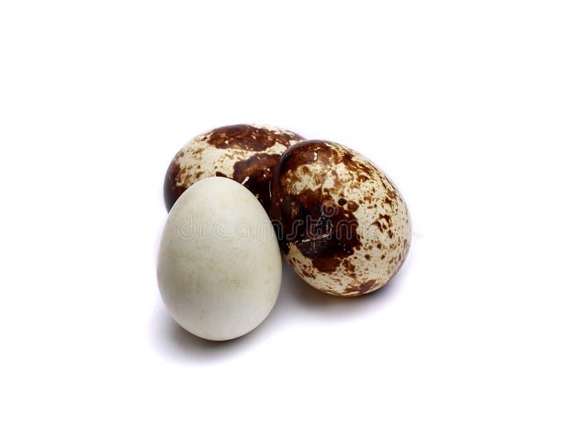 le fond eggs le blanc sélecteur de cailles d'isolement par orientation photo stock