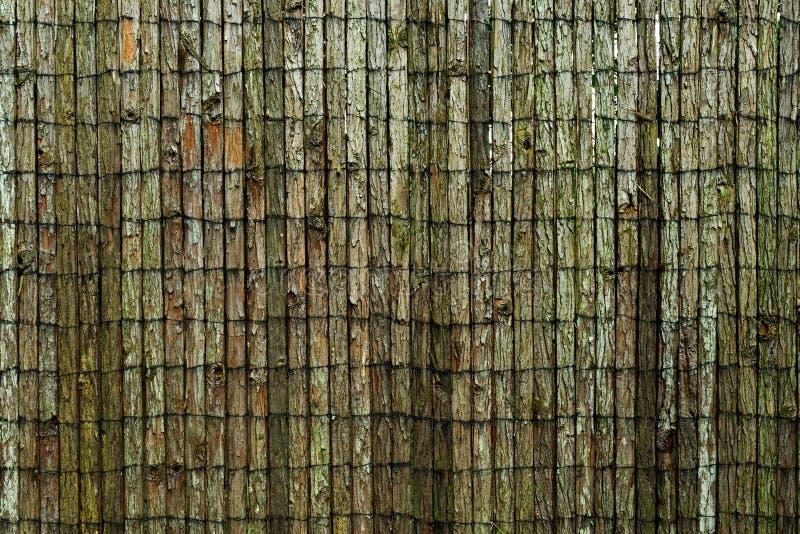 Le fond en bois couvert dans l'écorce d'arbre photos stock