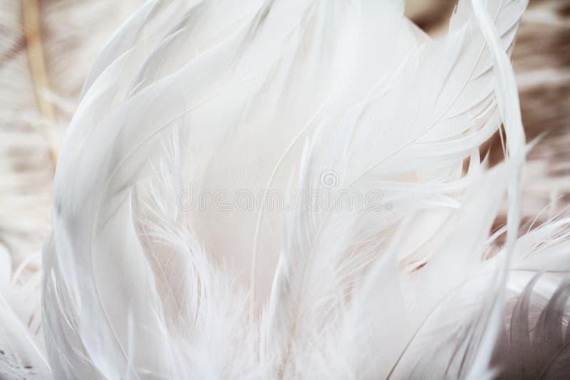 Download Le Fond Fait Varier Le Pas Du Blanc Photo stock - Image du contexte, décoration: 77152858