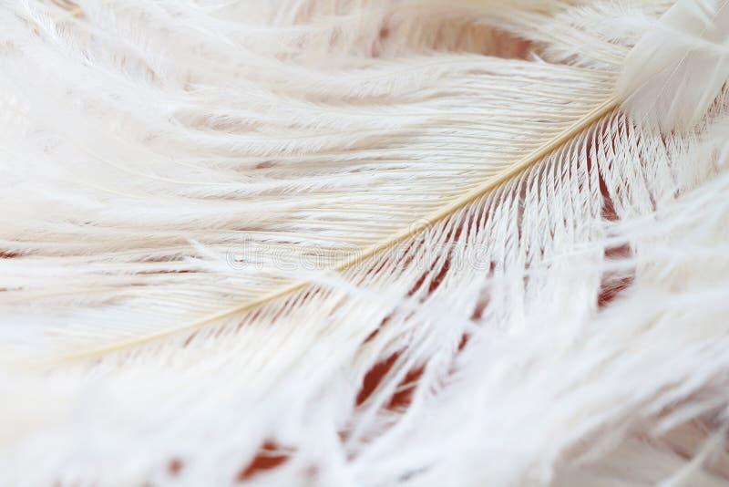 Download Le Fond Fait Varier Le Pas Du Blanc Image stock - Image du beauté, milieux: 77153289