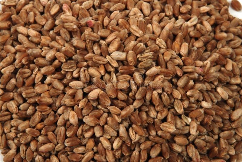 le fond injecte le blé photos stock