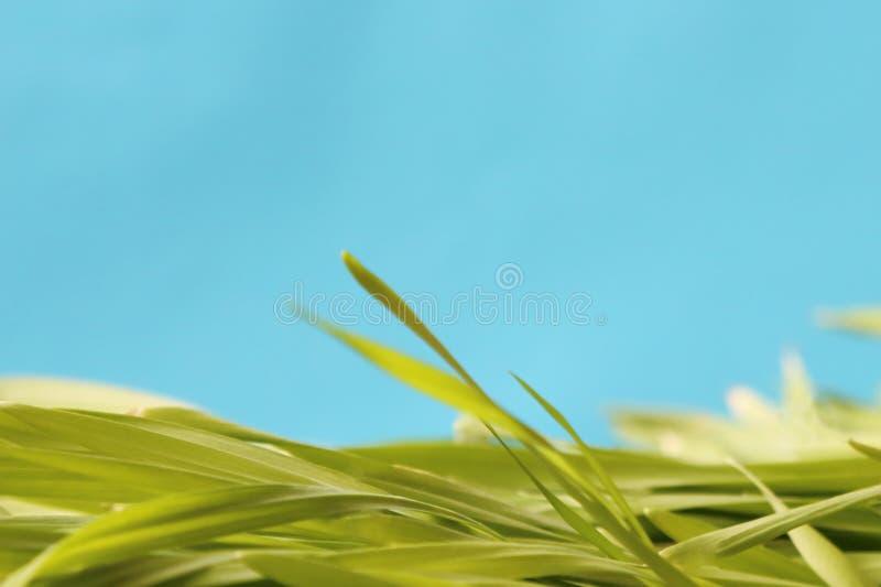Le fond lumineux qui respecte l'environnement de jardin de ressort colore s bleu-clair image stock