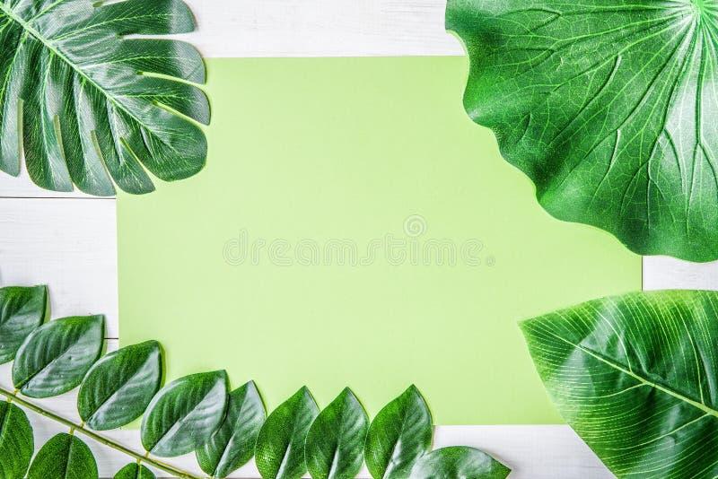 Le fond plat de configuration avec les feuilles tropicales et la carte verte copient la vue supérieure de l'espace photo stock