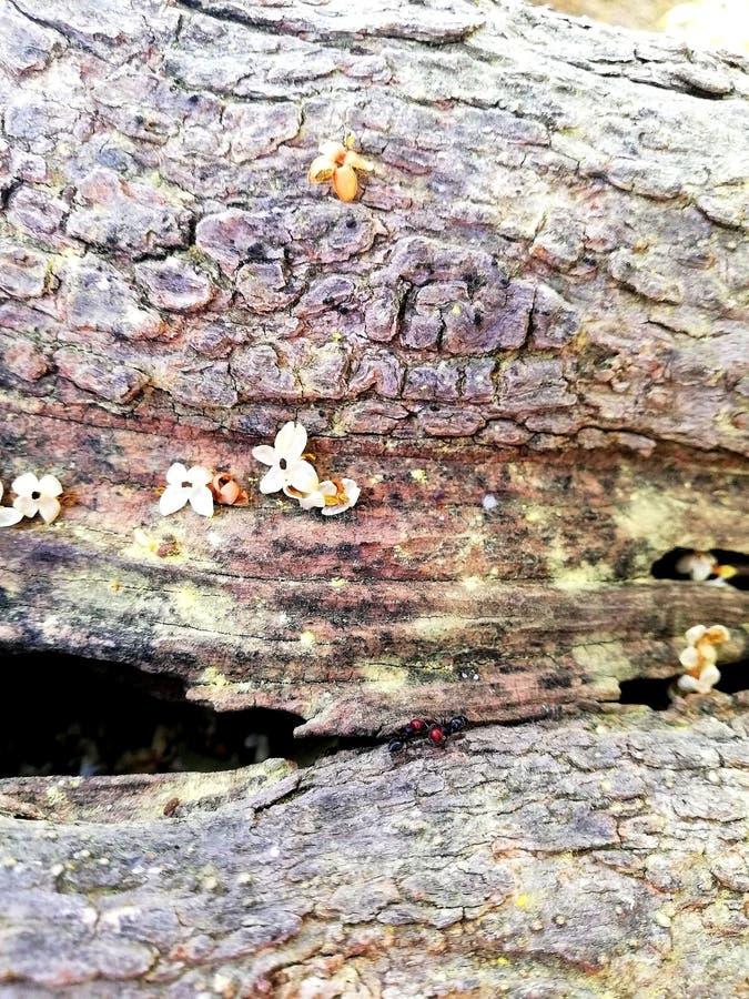 Le formiche vanno per le passeggiate sul tronco immagini stock libere da diritti