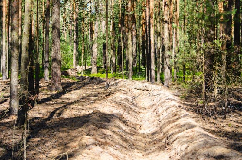 Le fossé du feu dans la forêt empêche la diffusion du feu pendant un feu images libres de droits
