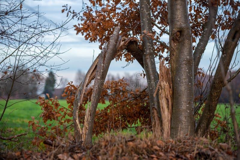 Le foyer principal est sur des arbres dans différentes situations photo libre de droits