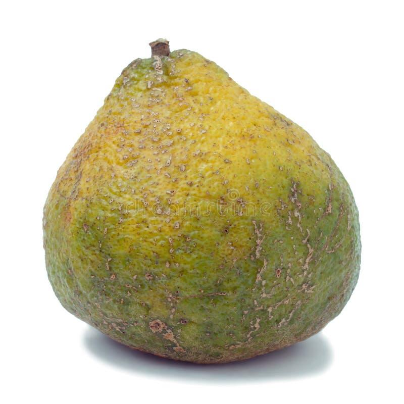 Le Fruit D Ugli A également Appelé Le Fruit D Uniq Photo libre de droits