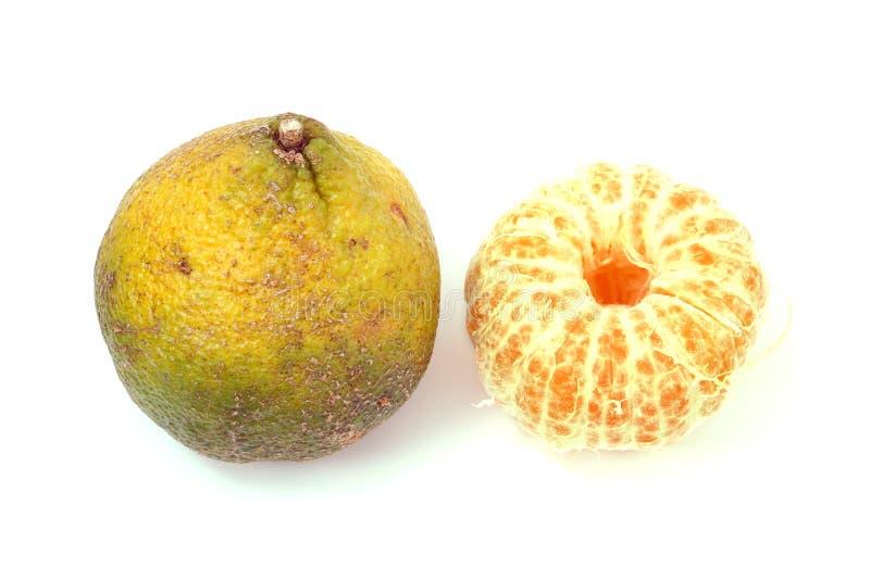 Le fruit d'Ugli a également appelé le fruit d'Uniq images libres de droits