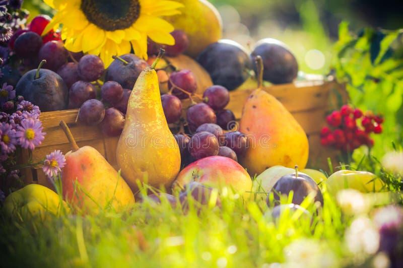 Le fruit de verger d'automne cultive le coucher du soleil d'herbe photographie stock libre de droits