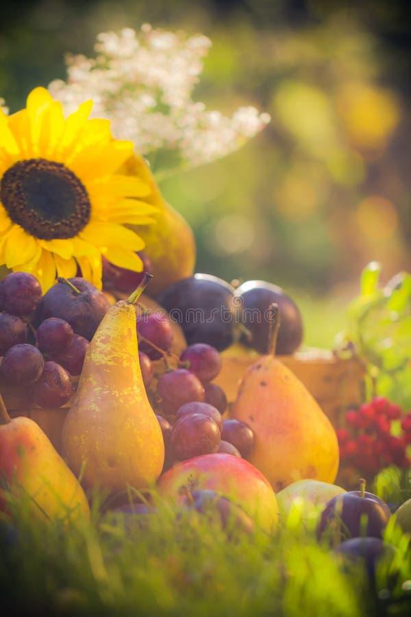 Download Le Fruit De Verger D'automne Cultive Le Coucher Du Soleil D'herbe Image stock - Image du vivacité, moisson: 76090427