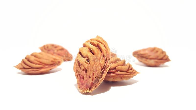 Le fruit pique sur le fond blanc images stock