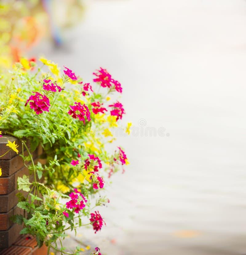 Le géranium fleurit sur le parterre à l'arrière-plan de trottoir de rue, foyer choisi, tache floue images libres de droits