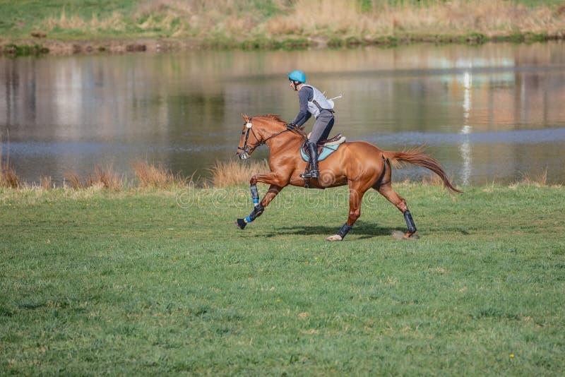 Le galop de chevaux lors de la compétition hippique image stock