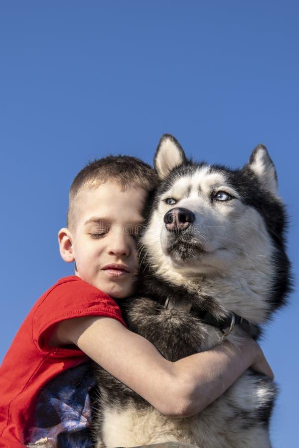 Le garçon a étreint avec le chien enroué sibérien d'amour sur le fond bleu Sur le bleu Mode de vie de famille photos libres de droits