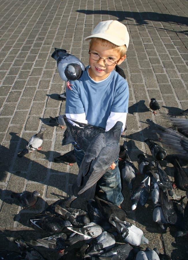 Le garçon alimente les oiseaux photos stock