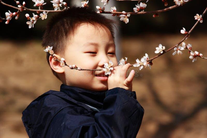Le garçon asiatique sent des fleurs photos stock